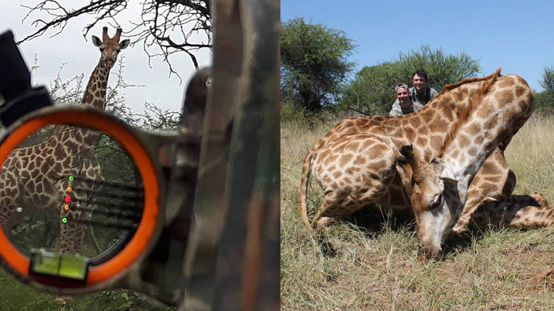 'Giraffe tastiest meat I ever ate' - Swedish politician who eats & kills wild animals shocks SM