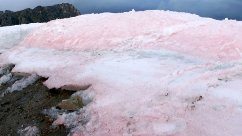 Not so pretty in pink: Arctic cotton candy-colored snow may be warning sign