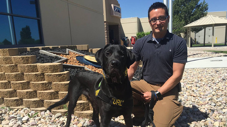 'Porn dog' arrives in Utah to sniff out hidden storage devices
