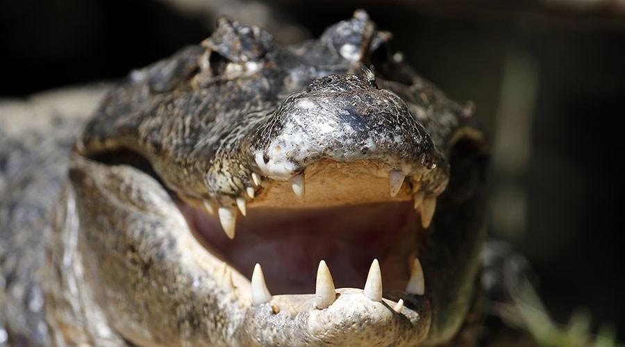 Gator attacks 2yo boy & drags him into water near Disney's Orlando resort