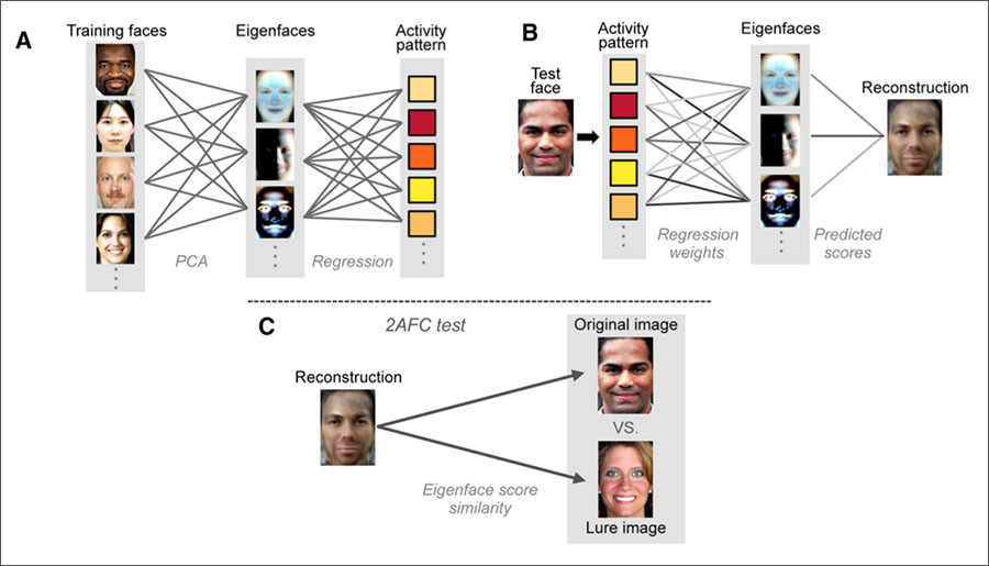 Mind-reading AI: Researchers decode faces from brainwave