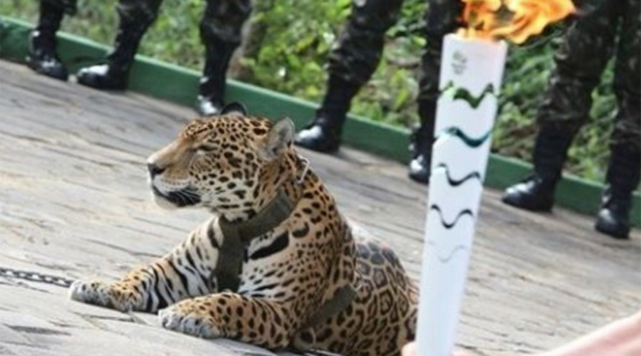 Olympic mascot jaguar shot dead while escaping after Rio 2016 ceremony