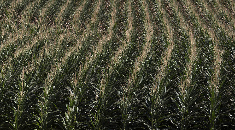 Nobel laureates to Greenpeace: 'Abandon your campaign against GMOs'