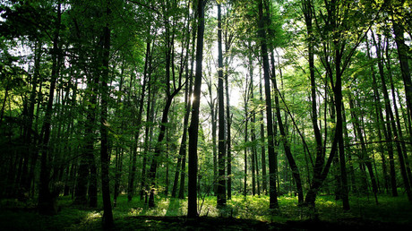 Poland in trouble with EU over tree-clearing at UNESCO-protected forest