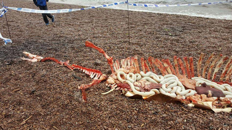 Ach naw: Remains of Loch Ness monster found along shoreline (PHOTOS)