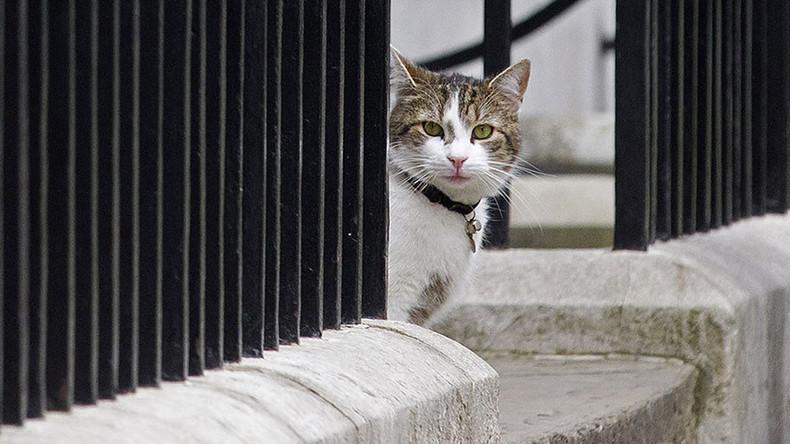 'I love Larry the Downing Street cat & I'll prove it!' Cameron tells MPs