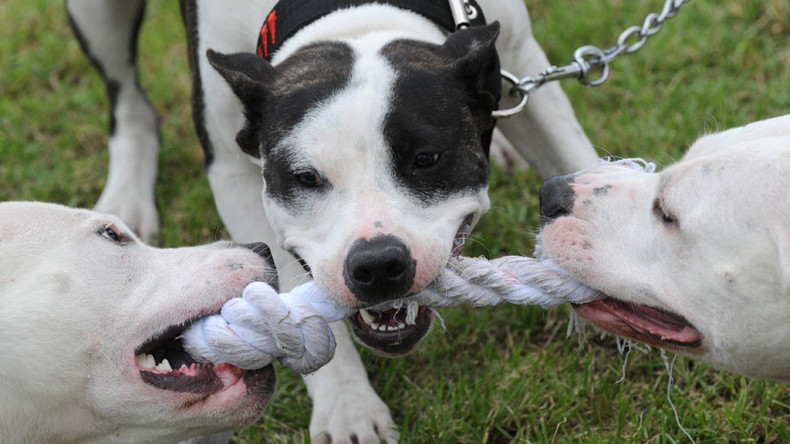 Woof justice? 100k sign petition to save #DeathRowDog as breeding laws slammed