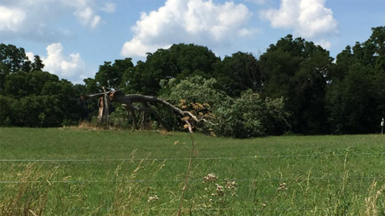 Get busy living, or get busy dying: Iconic tree from 'Shawshank Redemption' uprooted in storm