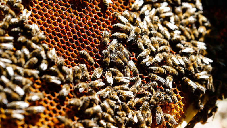 Common pesticide kills up to 40% of sperm in bees, possibly leading to shrinking population – study