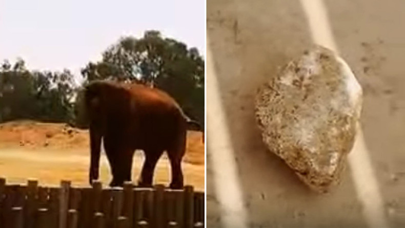 Girl dies in freak accident at Moroccan zoo when elephant hurls rock, hitting her on head (VIDEO)