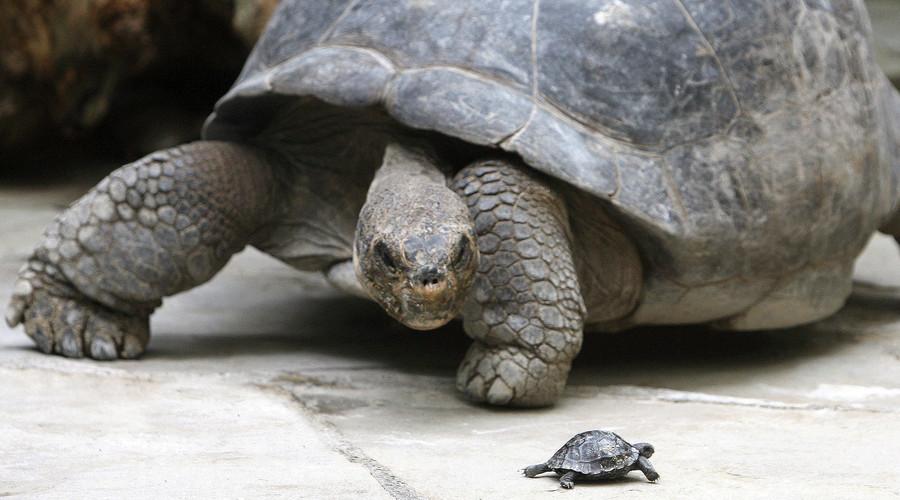Shellshock: Sea turtle population on Great Barrier Reef 'turning female'