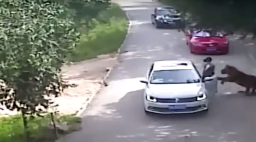 Tiger mauls woman to death at Chinese wildlife park (VIDEO)