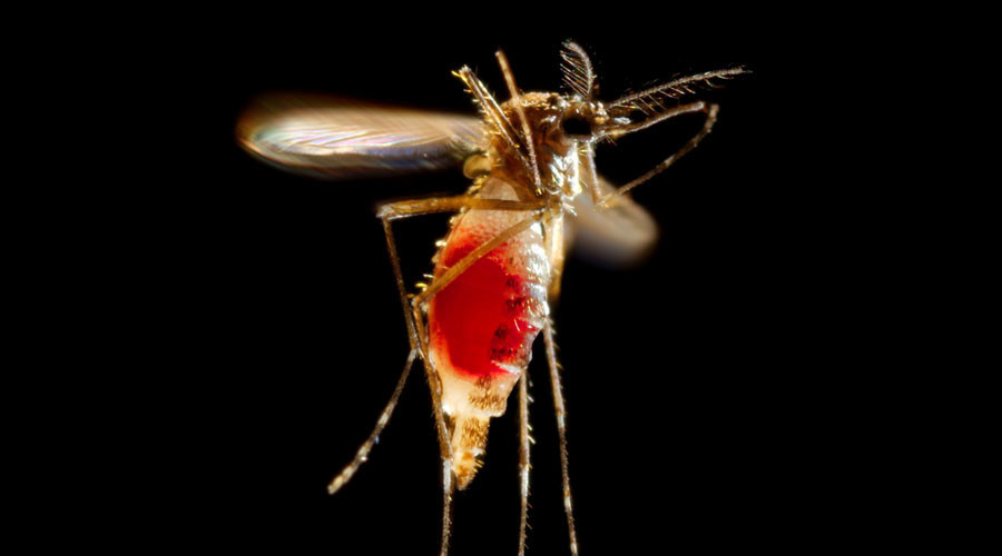 Mosquitoes in Miami have transmitted Zika virus – Florida gov