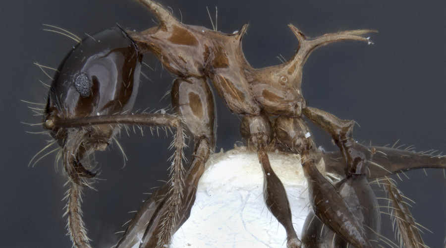 Scientists discover two new species resembling GoT dragons (VIDEO)