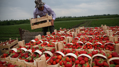 Russian food exports to double by 2025 thanks to international sanctions