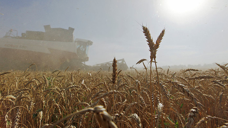 Egypt to buy 60,000 tons of Russian wheat