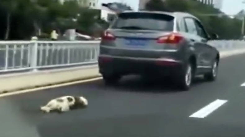 Dog dragged to death behind owner's car sparks angry mob in China (GRAPHIC VIDEO)