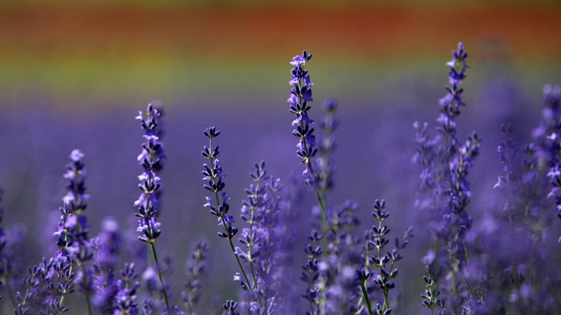 'Health worker' fined for advising patient to swap HIV drugs for lavender & essential oils
