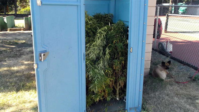 'Fresh Connection': Oregon man finds portable toilet packed with pot