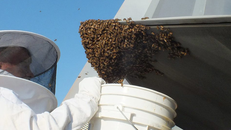 Sticky situation: Swarm of honeybees blocks F-22 fighter