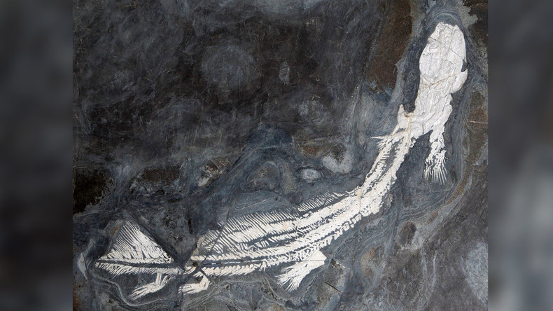 Jurassic shark: Cannibalism of ancient Pangea predator exposed by fossilized poo (PHOTO)