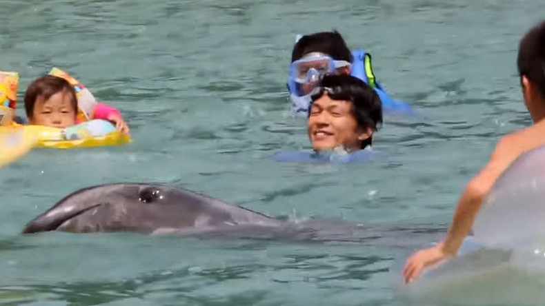 Death row dolphins: Tourists frolic with sea mammals ahead of Japan's annual slaughter (VIDEO)