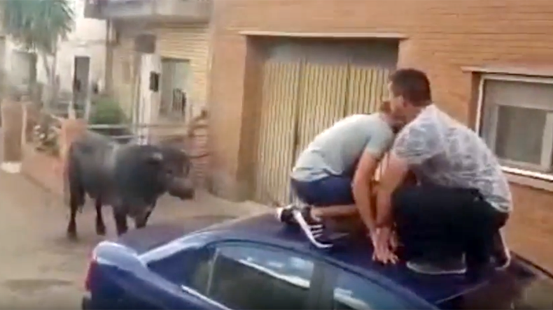 7-yo girl hospitalized after being gored by bull during Spanish fiesta (VIDEO)
