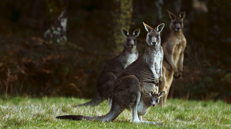 Kangaroo decapitated in 'torture video' uploaded to Snapchat (GRAPHIC PHOTOS)