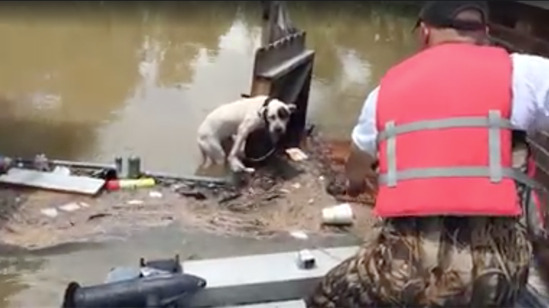 Stranded dog clinging to fence rescued from Louisiana flood waters (VIDEO)