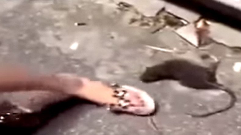 Zombie rat gets revenge on annoying human (GRAPHIC VIDEO)