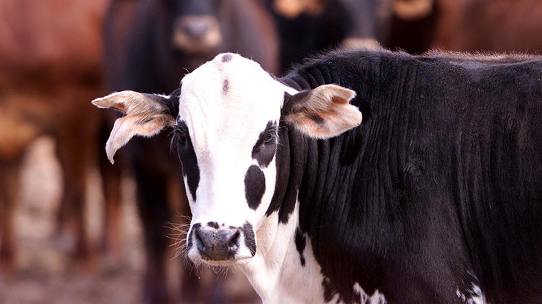 'They just fell': 19 cows killed by lightning while sheltering under tree at Texas farm