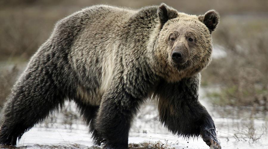 Oil market enters bear territory as glut fears revive
