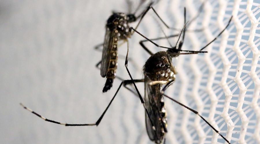Freak of nature: FDA approves genetically engineered mosquitoes to combat Zika virus