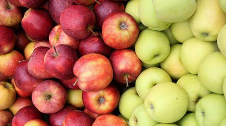 Polish apple farmers casualties of Russia-EU trade war
