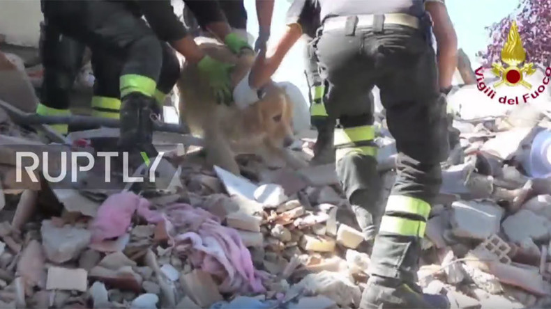 Dog rescued from Italy's earthquake rubble after being buried for 9 days (VIDEO)