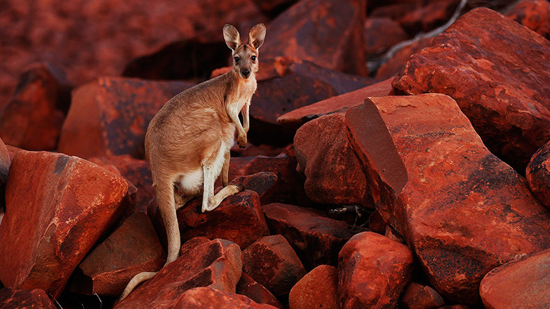 19yo Australian 'kangaroo bomb' plotter sentenced to 10 yrs