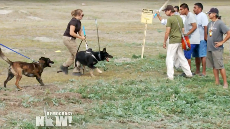 Sioux protesters 'attacked' by security dogs, pepper-sprayed at Dakota pipeline site (VIDEO)