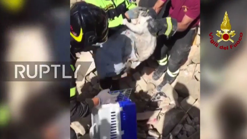 1 life down, 8 to go: Miracle cat rescued after 16 days in Italian earthquake rubble (VIDEO)