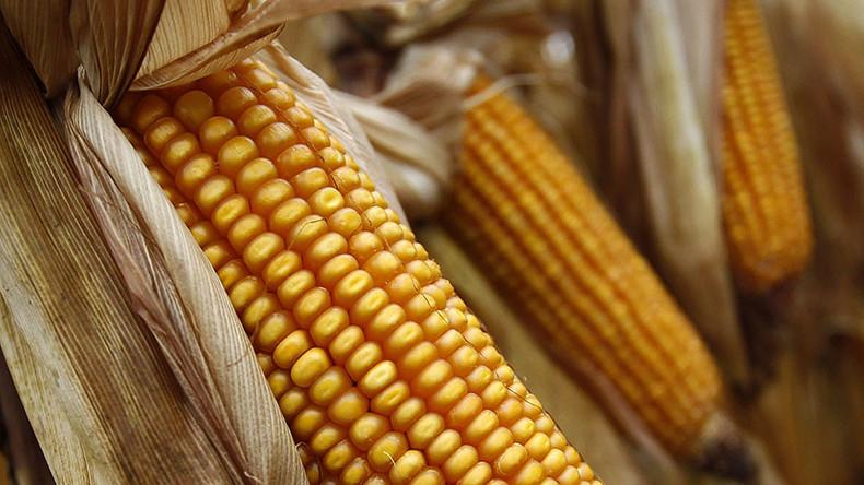 Bayer confirms Monsanto takeover with $66bn bid