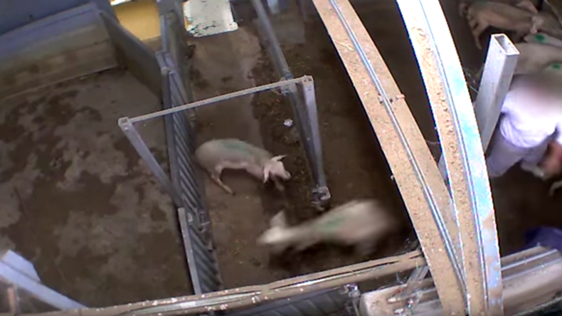 French MPs call for CCTV in slaughterhouses after gruesome video goes viral – report