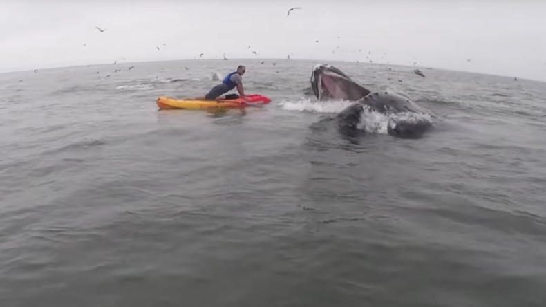Humpback whale launches at kayaker with open jaws (VIDEO)