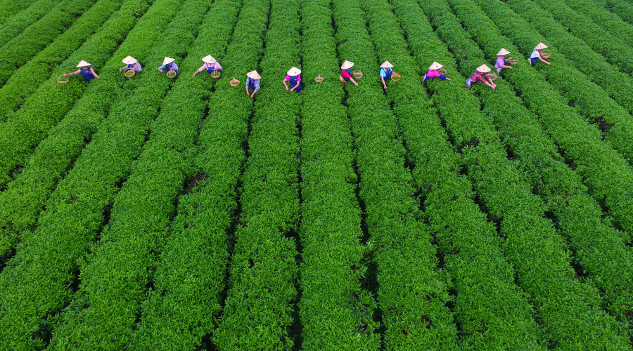 China to invest $450 billion in agriculture