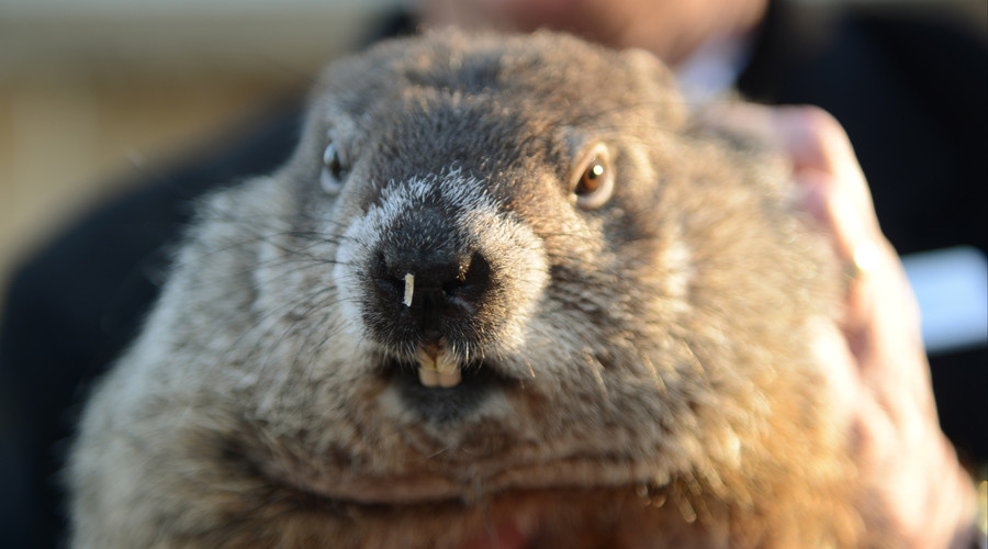 'Woodchuck homicide': NY cops suspended over groundhog killed with golf cart