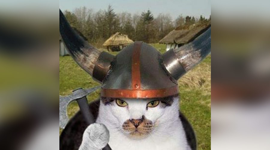 Ancient cats cruised with Vikings, DNA study reveals