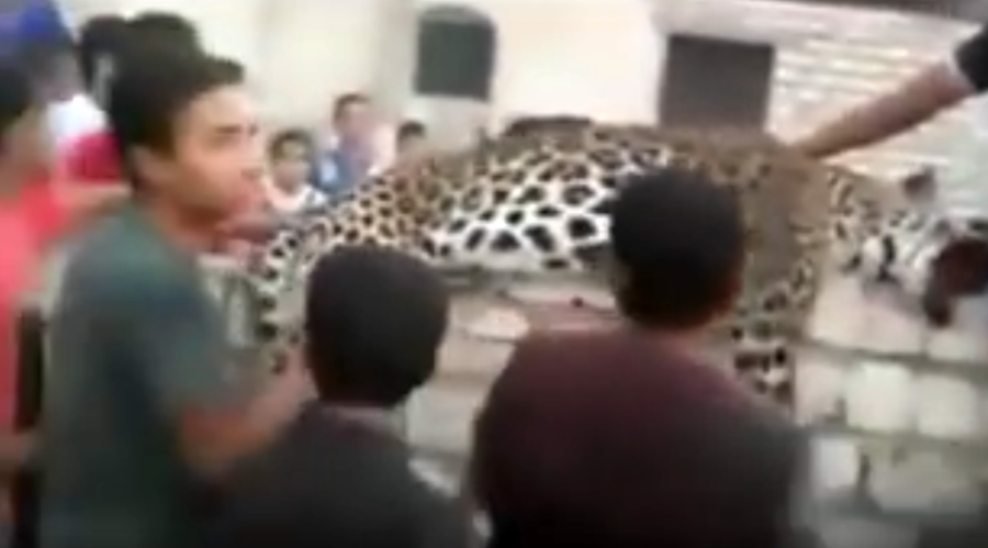Escaped leopard kills 9yo girl, selfie frenzy ensues (VIDEO)