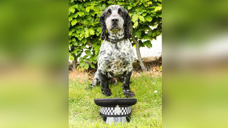 Billie the sperm-sniffing police dog recruited to track down rapists
