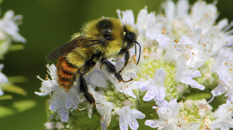 What's killing the world's bees? New study claims a surprising culprit
