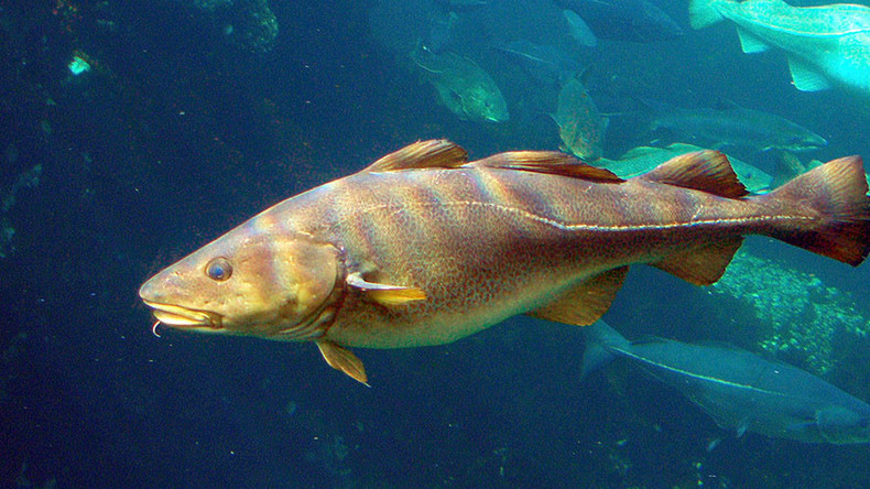 Dorsal dialect: Fish speak to each other in 'regional accents,' claim scientists