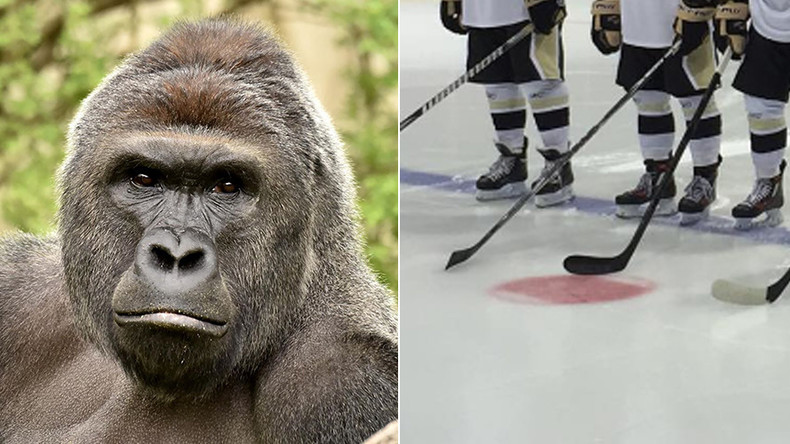 Sticks out for Harambe: Junior hockey team to honor slain gorilla with Wildlife Week jerseys