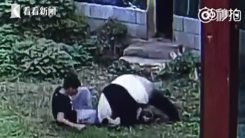Kung Fu Panda: Man gets taken down in epic zoo faceoff (VIDEO)